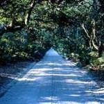 The Long Dirt Road
