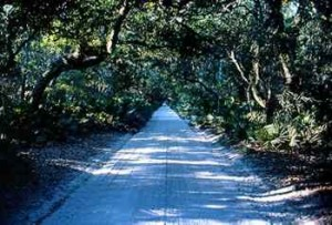 Ossabaw Island's long dirt road....the oldest in America